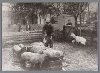 WAT002000546 Jan Wezel (1880) met zijn vrouw Krijntje Beets (1874) op hun boerderij, Jan voerde de varkens.Achtergrond ...