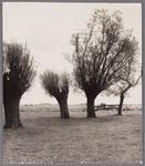 WAT002001508 Weiland met een aantal Wilgenbomen.