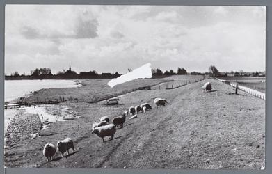 WAT002003111 IJsselmeerdijk bij Warder met grazende schapen.