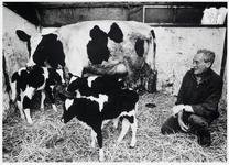 WAT003002769 Foto: boer Klaas Reijnders bij zijn koe Aagje 128.Aagje was net bevallen van een drieling, twee vaars ...