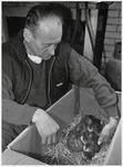 WAT003003686 De heer Th. Ordeman, Van Beekstraat 337, vond een nest met eendeneieren in zijn schuur.Nadat de eieren ...