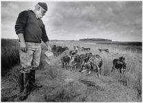 WAT003003841 Noordhollands Landschapsbeheerder Nico Dekker met een koppel schapen in het Ilperveld.