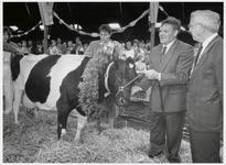 WAT003004111 Ilpendamse Koe Aaf 107 overschrijdt de magische grens van 100.000 kilo melk.Foto: Aaf 107 neemt de ...