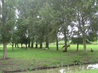 WAT120003342 Weiland rechts van de stolpboerderij aan de Westerweg nummer 68.