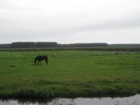WAT120003490 De Purmer met op de achtergrond het Purmerbos.