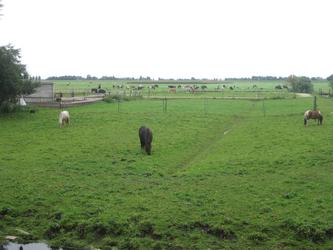WAT120003555 Weiland naast de boerderij aan de Oosterweg nummer E 2.