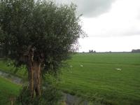 WAT120003476 Weiland behorende bij de boerderij aan de Hofweg nummer 11.