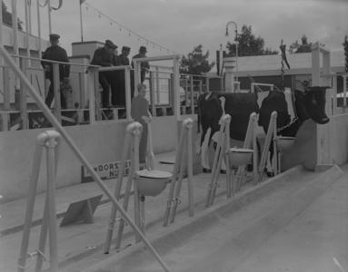46 Enschede: Opname van een koeienstal op een modelboerderij op de tentoonstelling 't Volle Profijt Enschede., 1936-08-26