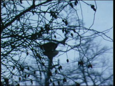 10611 BB00117 Diverse beelden uit het jaar 1971, met o.a. vogels in de sneeuw, etend uit een voederbak, een bezoek aan ...