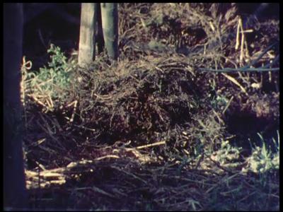 1064 BB07431 Een bedrijfsfilm van kunststofproducent Wavin rond de drainagebuis, met beelden van een boomkwekerij, het ...