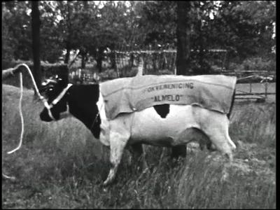 10858 BB02289 Een film van de Coöperatieve Boerenleenbank, met beelden van o.a. het afleveren van fokvee, het ...