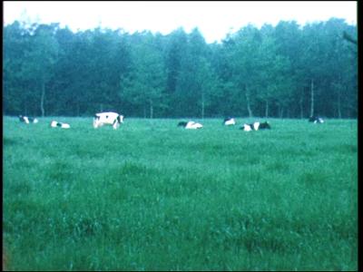 11551 BB02931 Demonstratie schapenscheren in de openlucht met toekijkend publiek.Henry Dunant Plantsoen met een rood ...