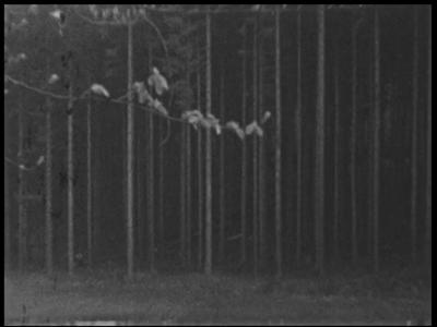 13468 BB02585 Samenvatting:Privé-opnames van een zomer- en wintervakantie in Oostenrijk.Beschrijving:00.02.10 Een ...