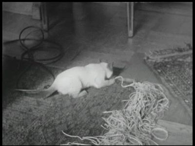 3378 BB09511 Een familiefilm van de familie Lamberts, met beelden van o.a.:- De poes druk in de weer met touw en wol;- ...