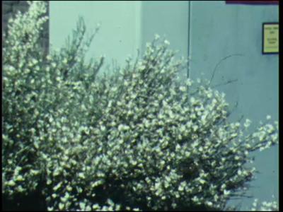 3910 BB07668 Een filmpje rond het thema natuur&techniek, met beelden van o.a.:- Een gebouw voorzien van de tekst 'Roken ...