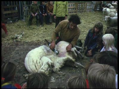 3931 BB09530 Een familiefilm van de familie Lamberts, met beelden van o.a.:- Schapen worden geschoren, Pieter kijkt ...