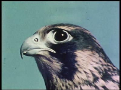 4370 BB05743 Deze documentaire film behandelt de F16 straaljager.0:00:01Tegen de achtergrond van beelden van een ...