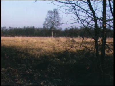 4389 BB06438 Een film over het natuurreservaat Aamsveen door de seizoenen heen, met beelden van hoogveen, heidevelden, ...