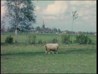 525 BB08136 Een familiefilm van de familie Lodérus uit Deventer, met beelden van o.a.:- Voorjaar '62, vee in de wei bij ...