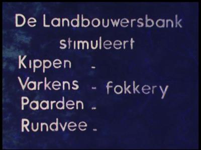 9514 BB02734 Een film rond de veefokkerij, met beelden van een pluimveefokbedrijf aan de Bornsestraat, met witte ...