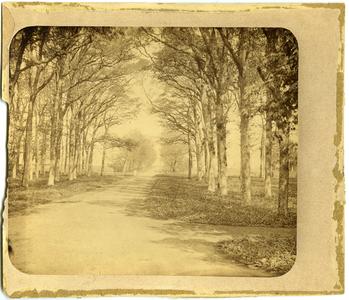 12930 FD032561 Laan met bomen op het landgoed van Tweenijenhuizen in Vollenhove., 1882-00-00