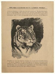 69 -TP001024 Afbeelding van een tijger.