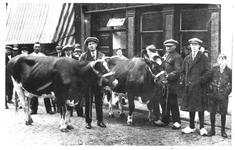 62062 Gezicht op een gedeelte van de slagerij C. Dussenbroek (Lauwerecht 3) te Utrecht met ervoor op straat twee koeien ...