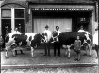 59777 Afbeelding van twee te slachten koeien voor De Transvaalsche Vleeschhal (Kanaalstraat 213) te Utrecht.